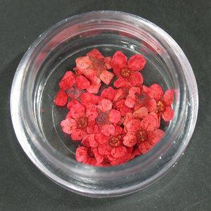 Fiori secchi rosso lp